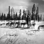 History Of Huskies And Their Origin