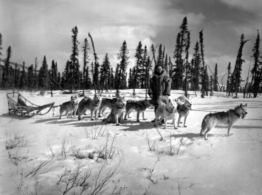 Siberian Husky breed history featured image