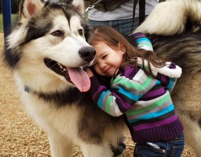 Husky Temperament And Behavior