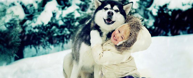 Love between Huskies and children
