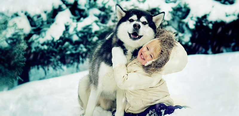 Love between Huskies and children