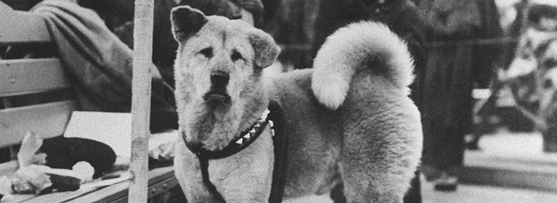 Loyal Dog Hachiko featured image