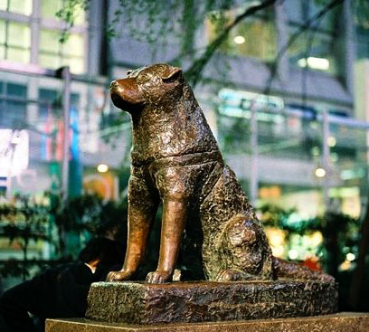Bronze statue of Hachikō at Shibuya train station.