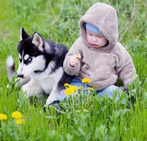 Huskies like to play with children