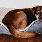 8 Tips for Living with Dogs and Keeping Your House Clean