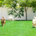 Creating Your Dog's Dream Backyard